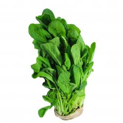 Rúcula Especial Horta Verde