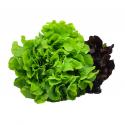 Alface Especial Hidropônica Horta Verde Crespa Mix